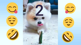 realy funny dog and cat. VIDEO 2
