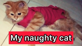 My naughty cat And angry with me