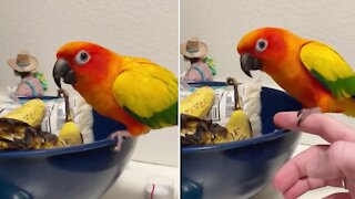Parrot repeatedly gets caught tying to steal bananas
