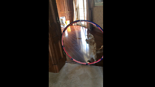 Hilarious Cat Dances with Hula Hoop and Catnip Mouse - Video