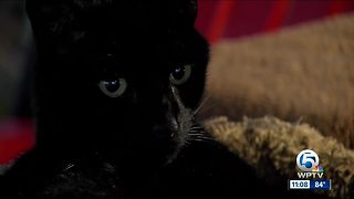 Cats paralyzed, put down after being shot by pellet gun