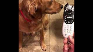 Guilty dog shamed for chewing on remote - Video