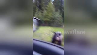 Wild black bear charges tourist - Video