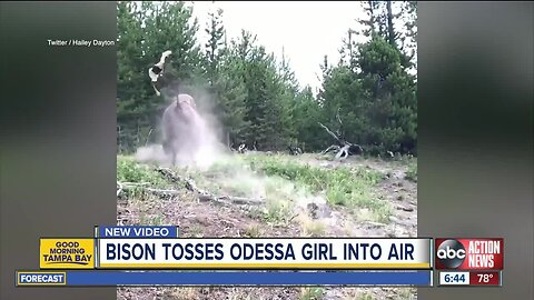 Fla. girl tossed in air when bison charges Yellowstone tourists