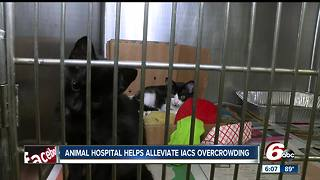 Animal hospital helps alleviate Indianapolis Animal Care overcrowding - Video
