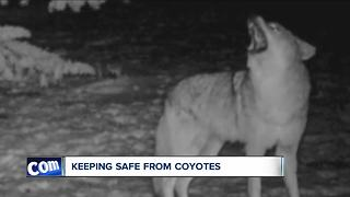 How to keep coyotes away - Video