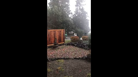 Winds and Rain Lash Port Orchard After Tornado Hits Town