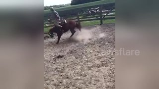 Angry horse doesn't want to be sold - Video