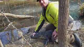 Frozen Alligators Thaw Out as North Carolina Temperatures Rise - Video