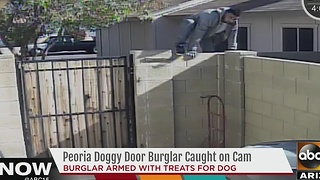 Peoria dog door burglar caught on camera - Video