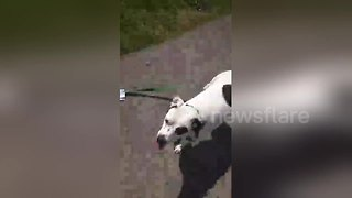 Dog and owner fight over mail - Video