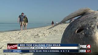 Residents say red tide is the worst they've seen in recent years - Video