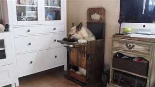 Dog With ME Eats in Specially Designed Chair - Video