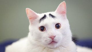 Raising Eyebrows: Cute Cat Becomes Viral Sensation - Video