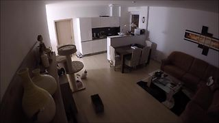 Security Home Footage Shows What Cat Does While Alone - Video
