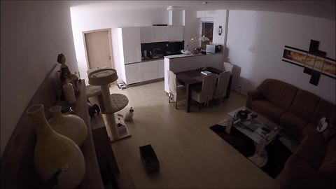 Security Home Footage Shows What Cat Does While Alone