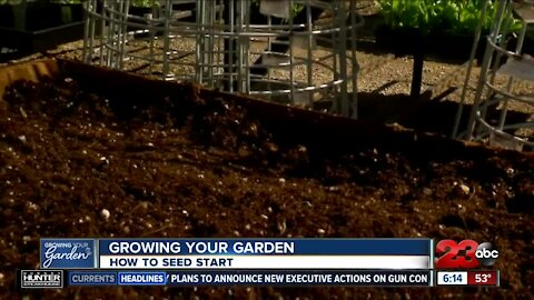 GROWING YOUR GARDEN: Getting your seedlings started