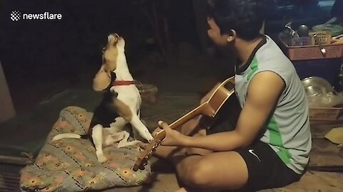 Dog sings along with owner playing the guitar