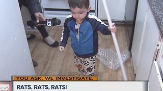Moms say apartments under siege from rats - Video