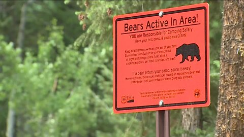 Camper shoots and kills a bear in Boulder County after it threatens him and dog