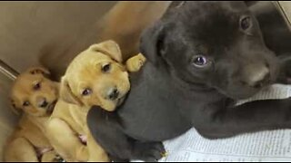 Ten puppies rescued from an abandoned house in Detroit