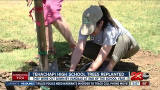 Tehachapi High School plants new trees after vandalism - Video