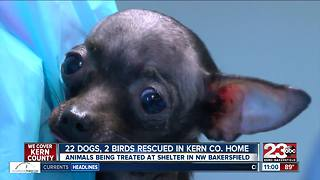 2 dozen animals rescued from terrible conditions - Video