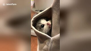 Angelic Little Kitten Refuses To Leave His Owner's Pocket - Video