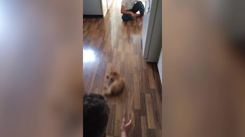 Dad And Son Slide A Cat To Each Other Across The Floor