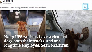 UPS Drivers Share Photos of Dogs They Meet on Their Routes - Video