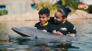 Discovery Cove | Morning Blend