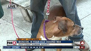 Pet of the Week: 8-year-old hound mix Boscoe
