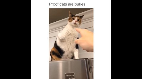 Footage proves that cats are indeed bullies