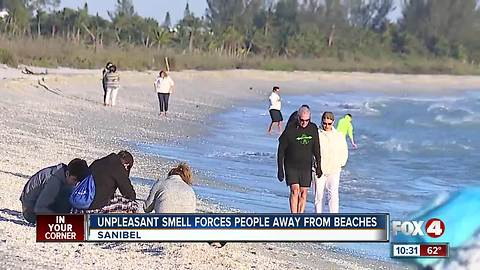 Unpleasant smell forces people away from beaches
