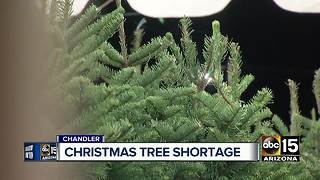 Nationwide shortage on Christmas trees - Video