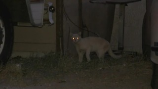 Clark County trapping ferel cats - Video