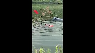 Rescue swimmers save driver from sinking car