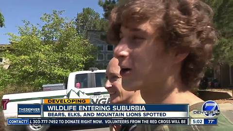 Boulder family finds mountain lion hiding in their backyard