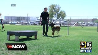 The training that goes into becoming a police K9 - Video