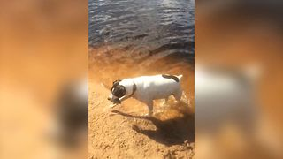 Fantastic Fishing Fido - Video