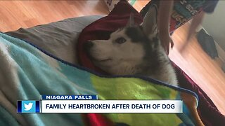 Family heartbroken after death of dog