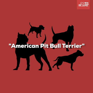 American Staffordshire Terrier: Everything You Need to Know