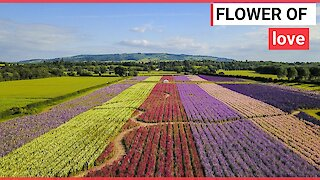Stunning aerial video show colourful flowers