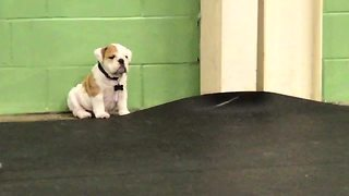 Introvert Puppy Sits All Alone, Sulking At The Corner Of A Playground - Video