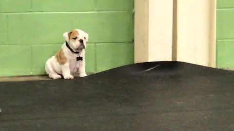 Introvert Puppy Sits All Alone, Sulking At The Corner Of A Playground