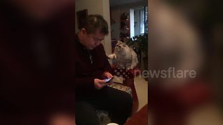 Cat Keen For Owner's Attention