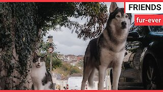 Meet the cat and dog who go on WALKS together