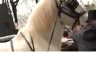 Three Injured in Collision Between Carriage Horse and Cars Near Central Park - Video