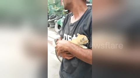 Truck driver uses hydraulic lift to rescue kitten stuck under bridge