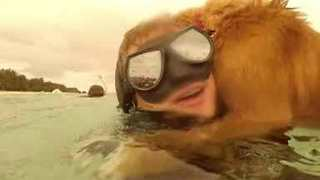 Dog Needs to Be Rescued After Swimming Out to Snorkelers